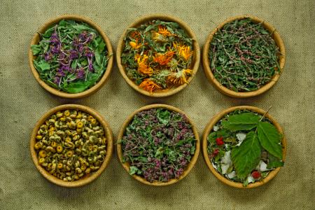 Phytothérapie des plantes qui soignent, santé, ménopause, 50 ans