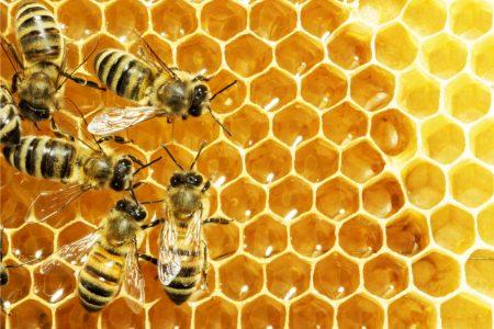 avoir des abeilles 1