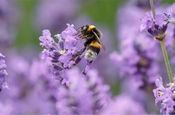 avoir des abeilles 2