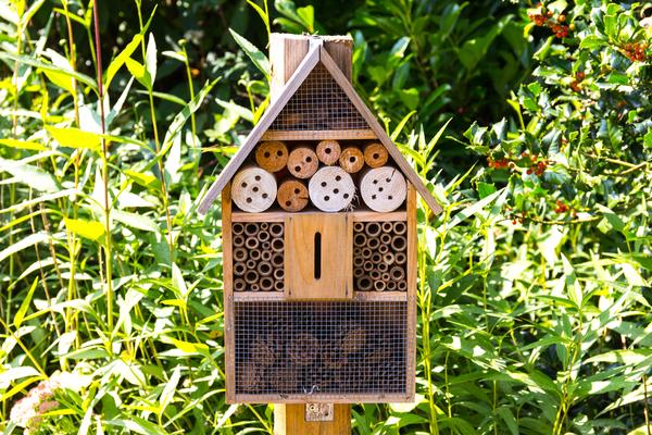 avoir des abeilles 3