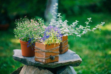 plante pot