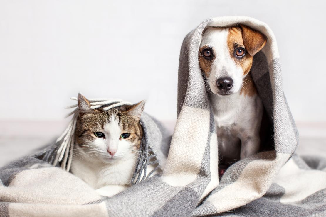 L'hiver, une saison propice à l'arthrose chez les animaux