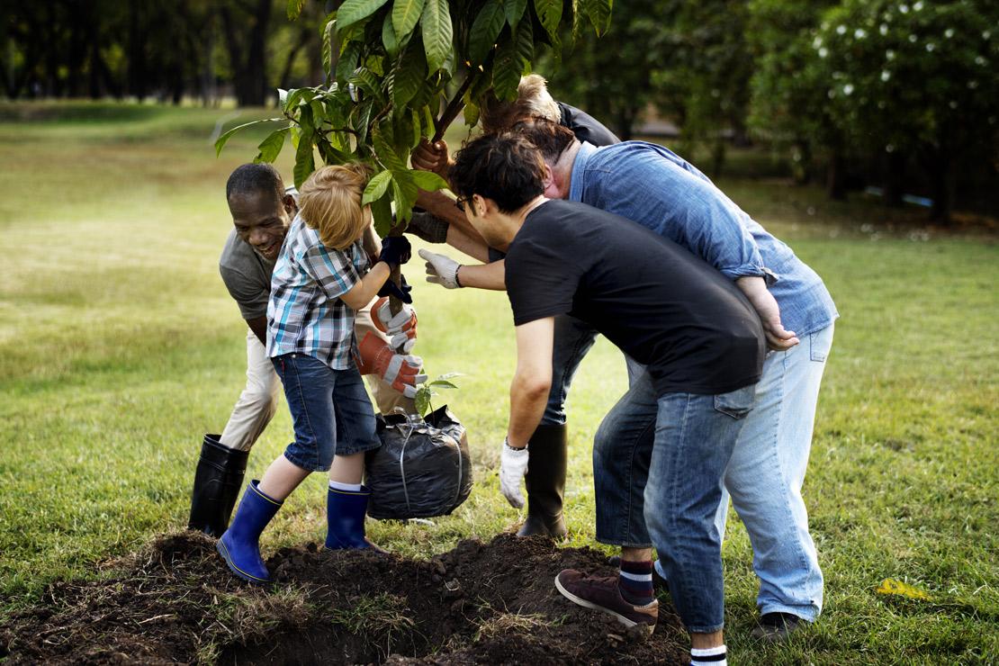 photo personne plantant un arbre