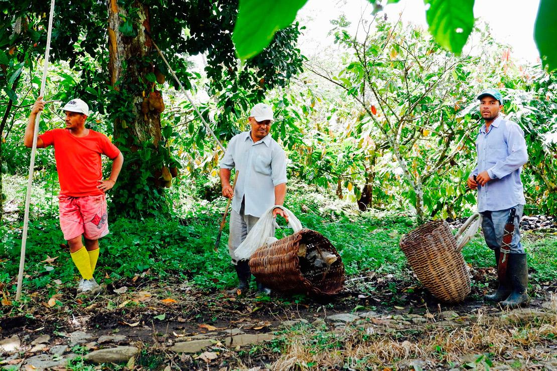 chocolatier marcolini voyage au brésil