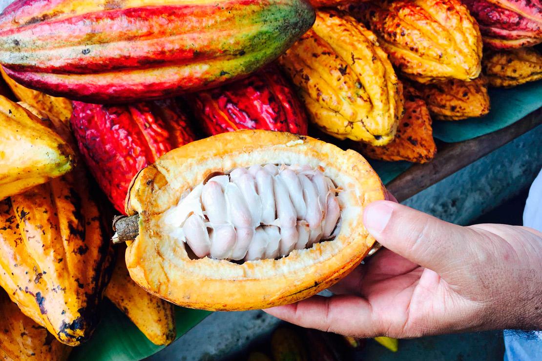 Intérieur fève de cacao