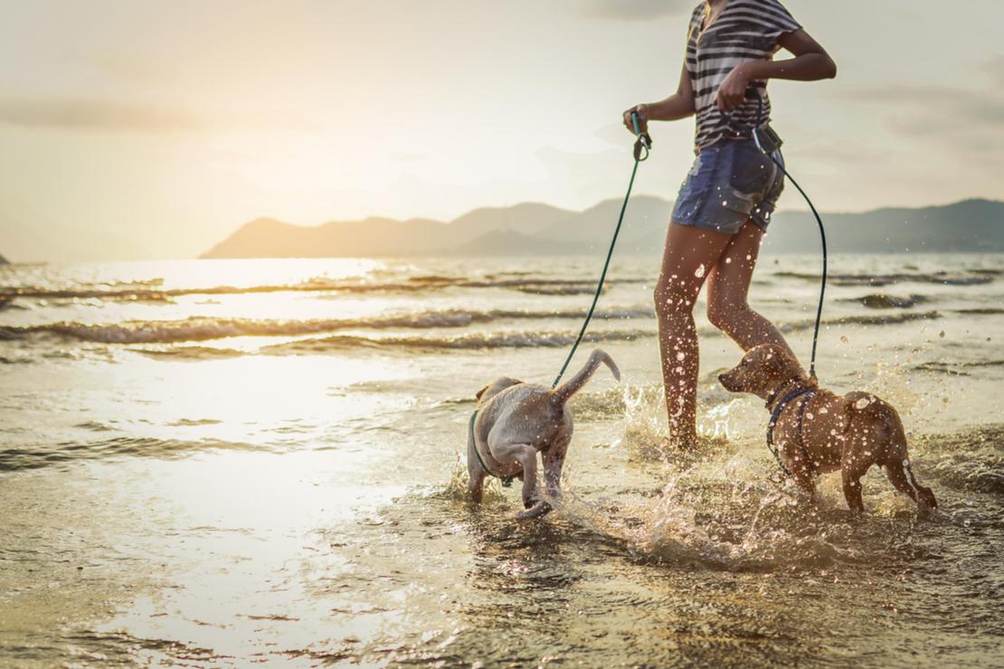 5 idées d'escapades avec mon chien