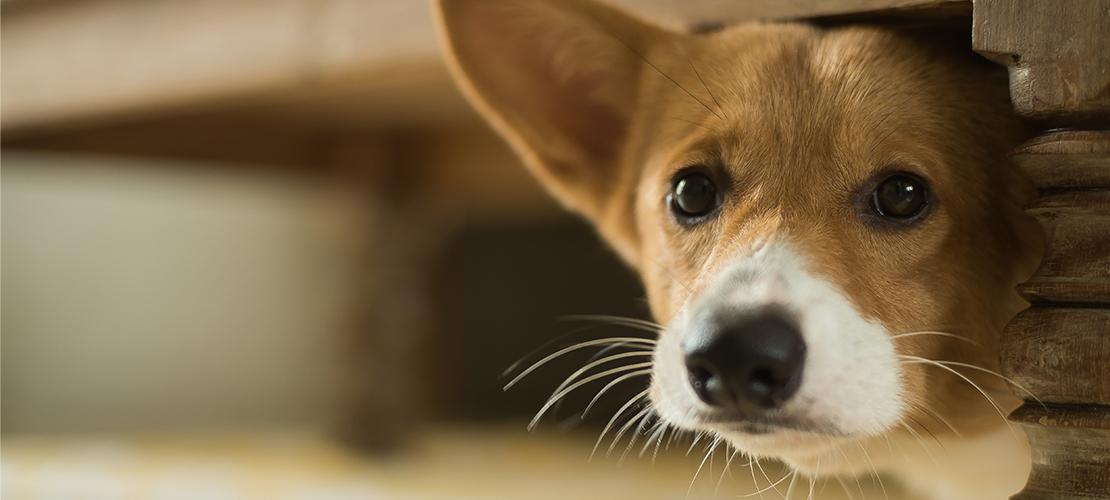 hond stofzuiger