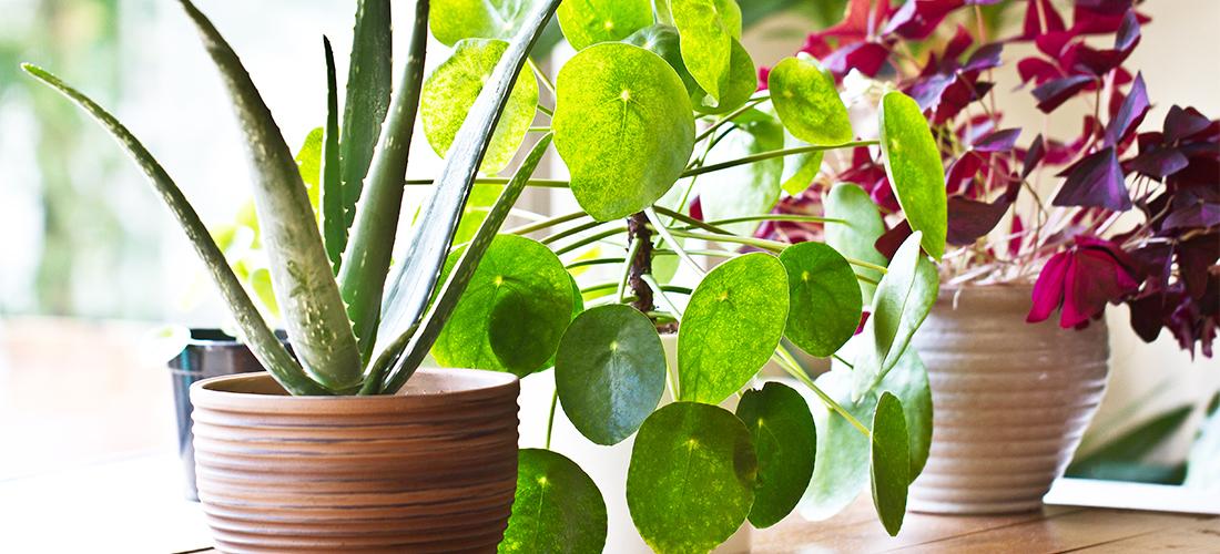 planten spotify
