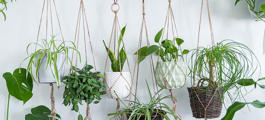 hangplanten verzorgen